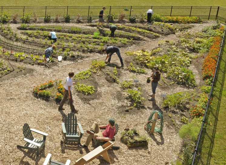 Students farming in the on campus plot